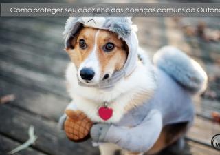 Como proteger seu cãozinho das doenças comuns do Outono?