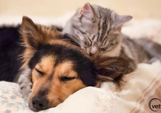 Você sabia que existem doenças que afetam tanto os cães quanto os gatos?