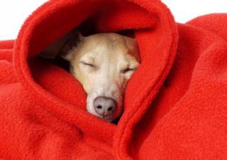 Seu cãozinho está com dor, frio ou os dois?