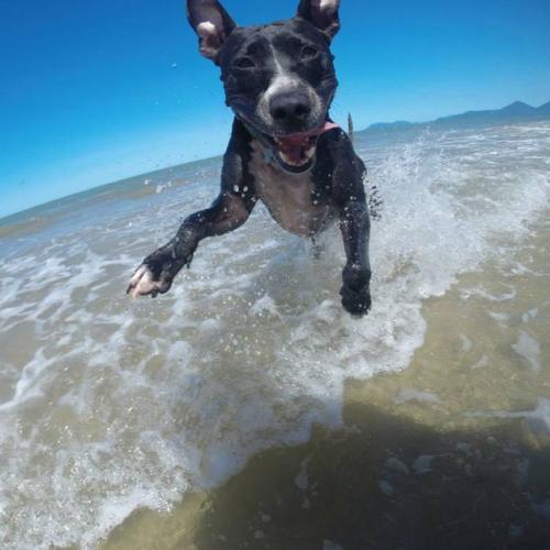 Viajar com o cachorro